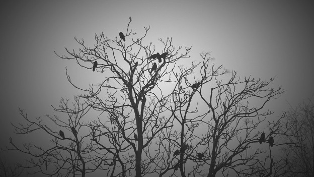 Plirs utschels sin la pumera en la nebla dal november