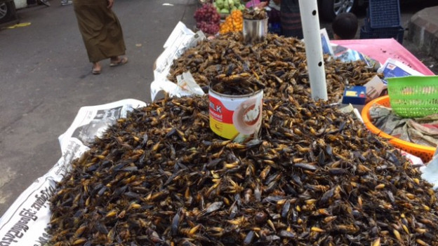 Insects da mangiar a Myanmar.