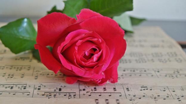 Ina partitura cun ina rosa cotschna