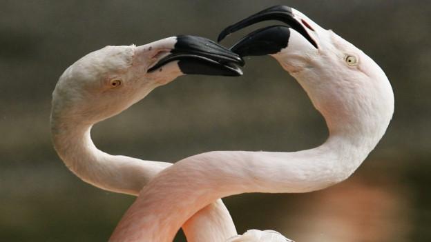 Il flamingo l' inspiraziun per la mascotta da la «Streetparade»