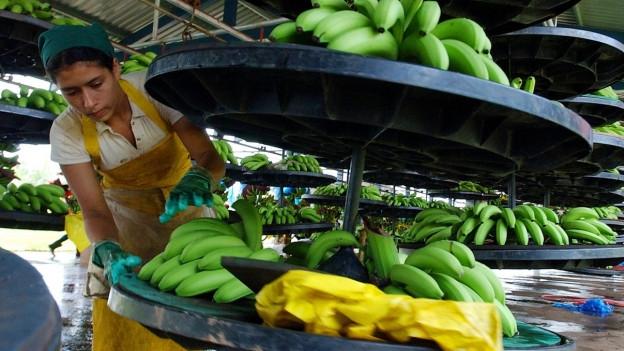 La Costa Rica è il segund grond exportader da bananas dal mund