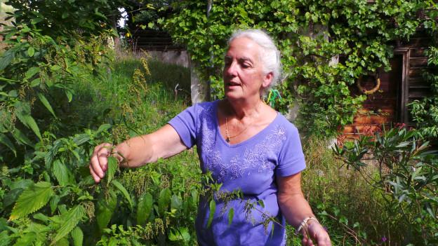 Las urticlas - ina da las plantas preferidas dad Ingrid Ritter