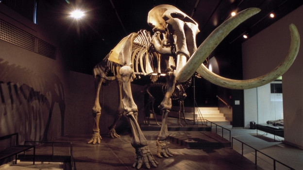 Terra da mamuts.