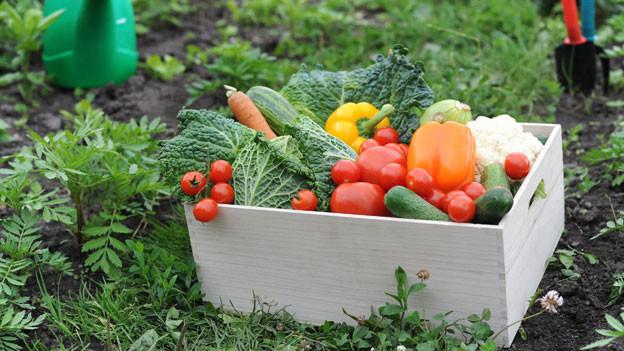 Frisches, saisonales Gemüse direkt ab Hof.