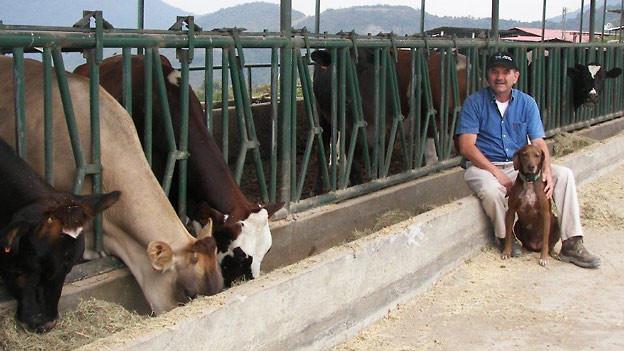 Jack Streule mit seinen Kühen und Hund Frida. Das Weideland erstreckt sich bis auf eine Höhe von 1'900 Metern. Während der monatelangen Trockenzeit im Winter verdorren die Weiden, die Kühe müssen mit Heu gefüttert werden.