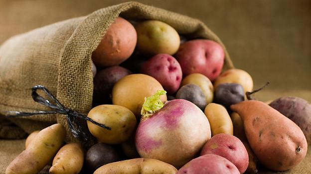 Aus Kartoffen und Speiserüben lässt sich eine fein schmeckende Mahlzeit zubereiten.