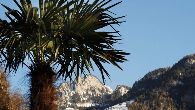 Die Palme hat eine wichtige Symbolkraft.