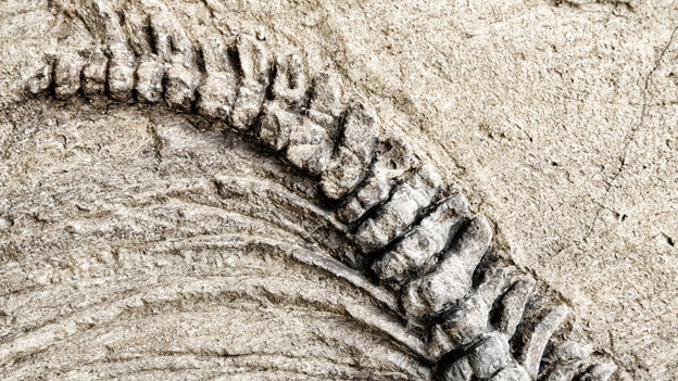 Versteinertes Skelett eines Reptils.