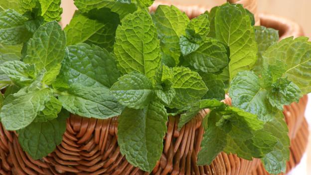 Pfefferminze: Bekannt vor allem als Tee-Basis, schmeckt aber auch in einem Kuchen.