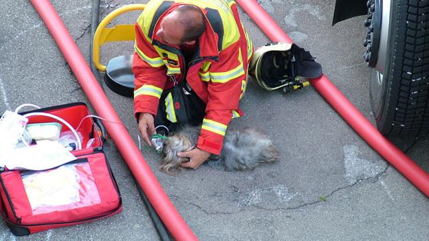 Ein Herz für Tiere: Der Feuerwehrmann versorgt den Hund mit Sauerstoff.