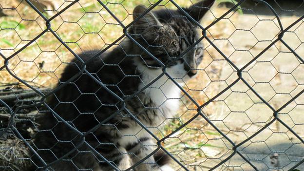 Gerade im Sommer müssen viele Tiere auf ihre Besitzer warten.