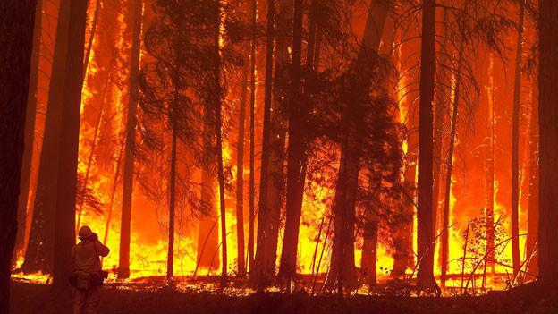 Kalifornien ist derzeit von Waldbränden betroffen.