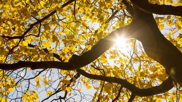 Nie ist das Licht schöner als im Herbst.