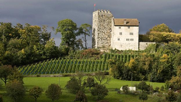 Auch unterhalb des Aargauer Schloss Habsburg werden Weinreben angebaut.