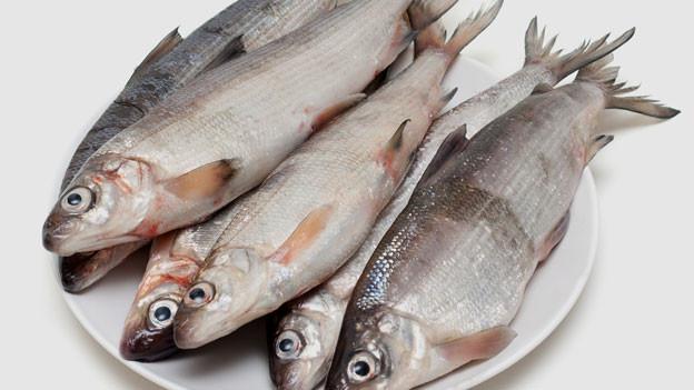 Vorgewölbte glänzende Augen und leuchtend rote Kiemen deuten auf einen guten frischen Fisch hin.