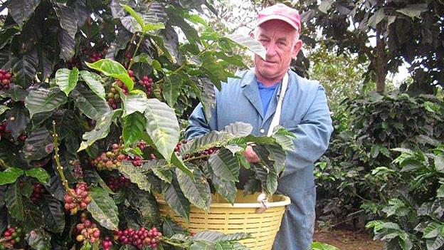 Josef Waespe bei der Kaffee-Ernte in Costa Rica.