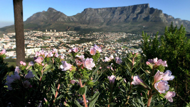 In der Nähe von Kapstadt haben sich Feisslis niedergelassen.