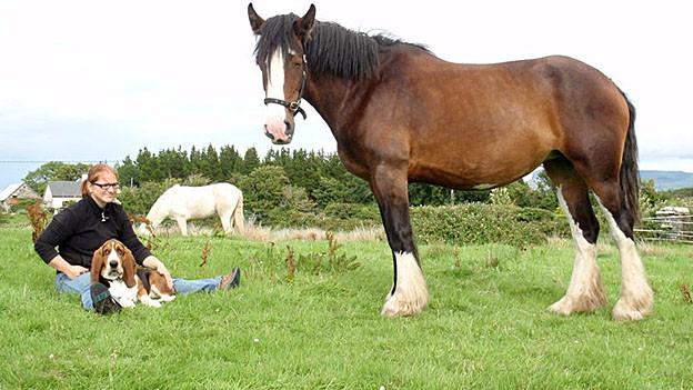 Mit Pferd und Hund: Das ist das neue Leben von Daniela Schwander.