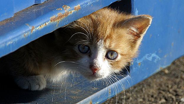 Wer keine junge Katzen will, sollte sein Haustier kastrieren.