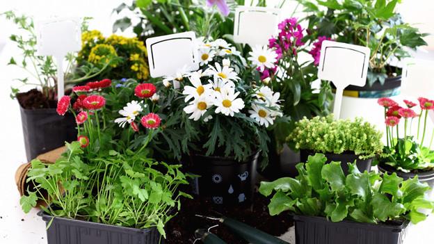Bestimmte Blumen lassen sich wunderbar mit Gemüse kombinieren.