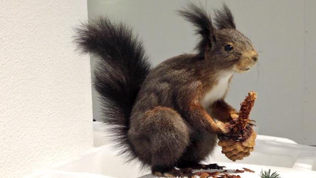 Eichhörnchen legen Wintervorräte an