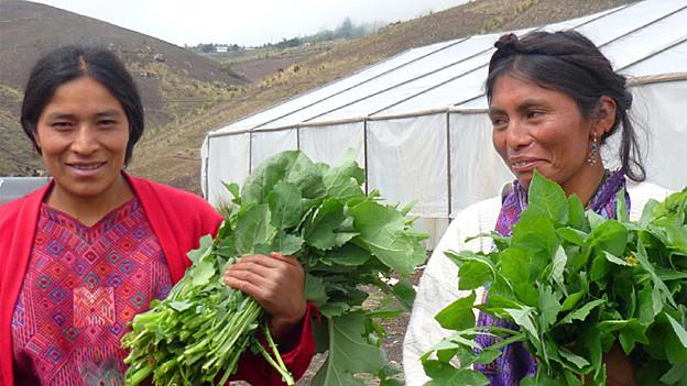 Ein Vivamos Mejor-Projekt gegen den Hunger im Atitlán-Hochland von Guatelama.