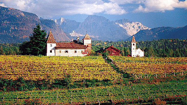 Weinberg im Südtirol