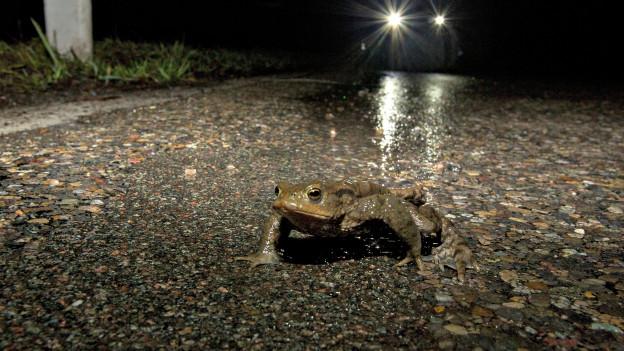 Frosch auf der Strasse.