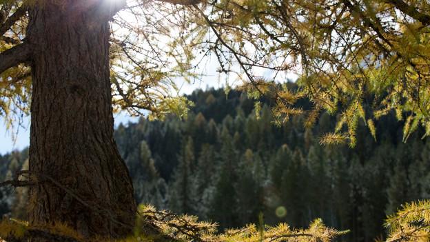Sonne scheint durch die Bäume.