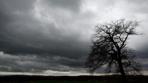 Baum im Unwetter.