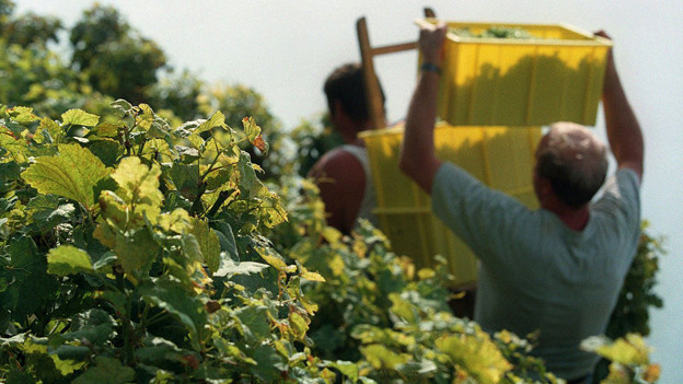 Hier entsteht Spitzenwein: Rebberge zwischen Lausanne und Vevey.