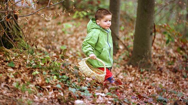 Junge sucht im Wald nach einem Osternest.