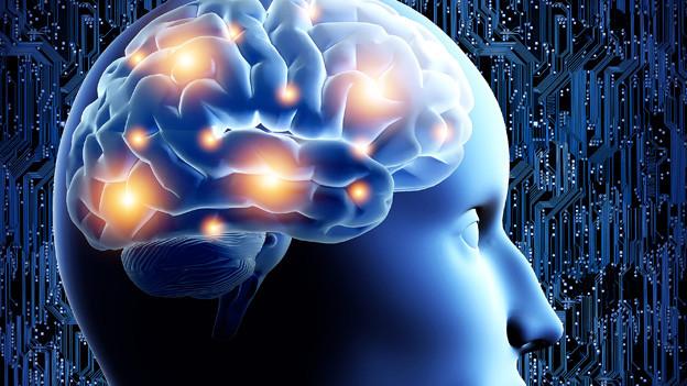 Grafik des menschlichen Gehirns.