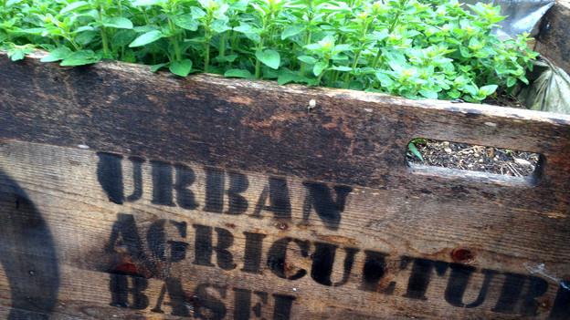 Schild «Urban Agriculture».