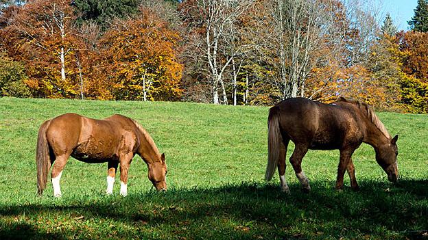 Pferde auf einer Weide.