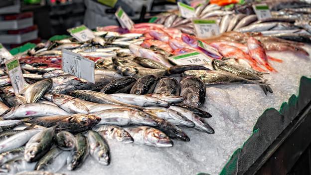 Verschiedene Fische auf Eis.