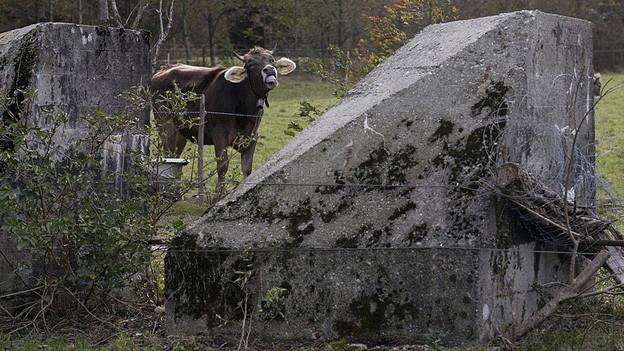 Panzersperren im Vordergrund. Dahinter eine Kuh und Waldrand.