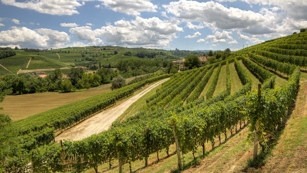 Blick auf Weinberge im Piemont.