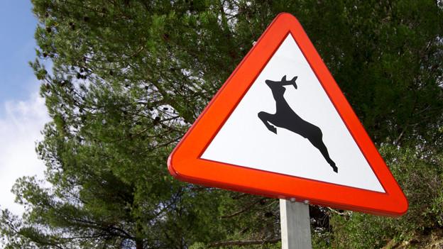 Schild mit Warnung vor Rehen.