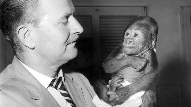 Schwarz-Weiss-Aufnahme von Ernst Lang mit dem Gorilla-Baby Goma.