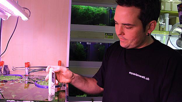 Ein Mann steht beim Aquarium.