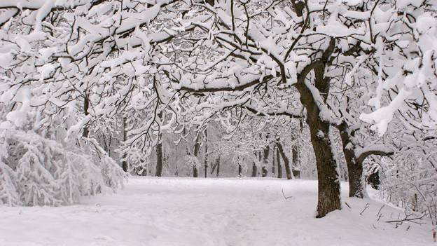 Verschneite Landschaft mit Bäumen.