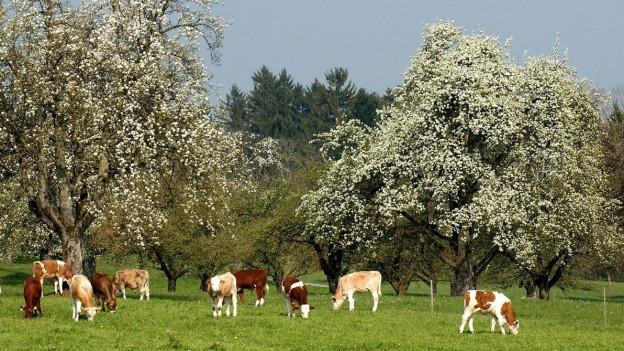 Hochstammbäume im Kanton Thurgau.