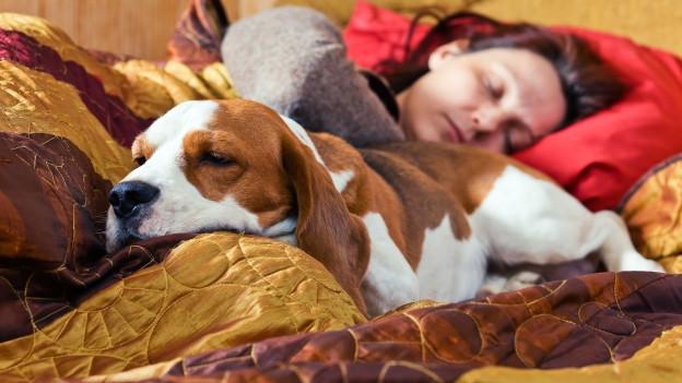 Hund im Bett mit Frau.