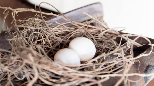 Nest mit Eiern drin.