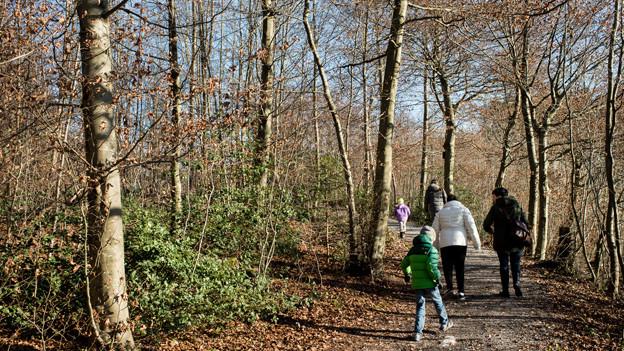 Leute spazieren im Wald.