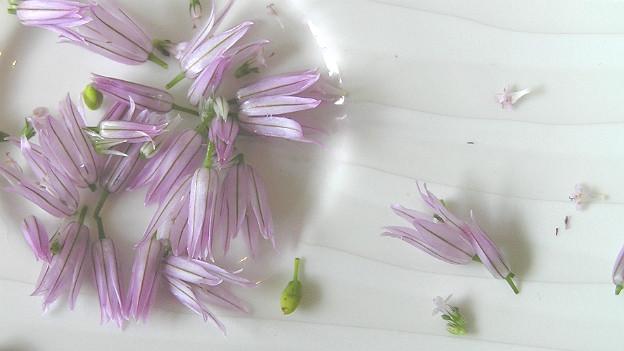 Violette Blüten von Schnittlauch auf Porzellanteller