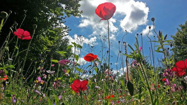 Bild einer Blumenwiese.