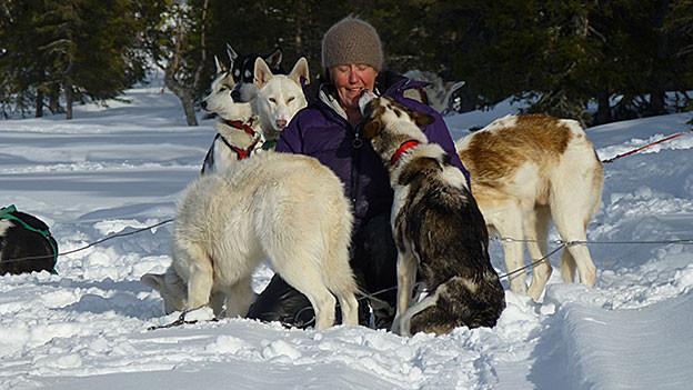 Frau mit Kappe ist von Schlittenhunden umringt.