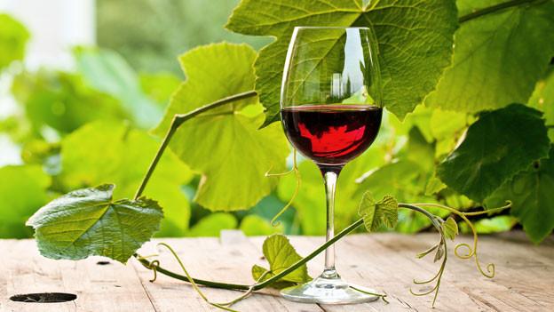 Rotweinglas mit Rebe im Hintergrund.